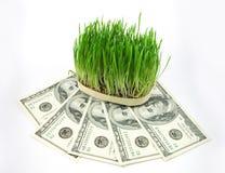 деньги травы стоковые изображения