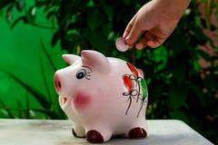 Деньги что делает все вырасти стоковая фотография rf