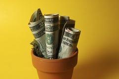 деньги potted Стоковые Фото