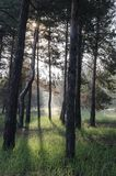 День весны солнечный в сосновом лесе стоковое изображение rf