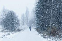 День в парке, общительный человек Snowy Стоковые Изображения RF