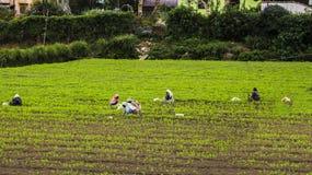 День в полях Стоковое Изображение