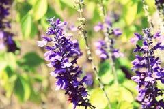 День в саде Стоковые Фотографии RF