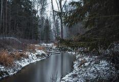 день деревьев реки зимы леса холодный стоковые фото