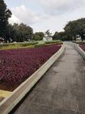 День Джакарты Стоковые Фото