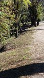 День леса Стоковые Фото