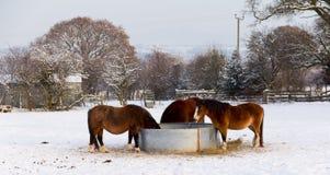день есть подавая лошадей сена приурочивает зимы Стоковые Фото