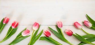 день женщин Розовая граница тюльпанов на белой деревянной предпосылке, космосе экземпляра, взгляд сверху, знамени Стоковые Фотографии RF