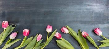 день женщин Розовые тюльпаны на голубой предпосылке, космосе экземпляра, взгляд сверху, знамени Стоковое фото RF