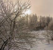 День зимы морозный в лесе Стоковая Фотография