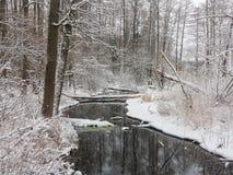 День зимы пасмурный и река леса стоковое фото rf