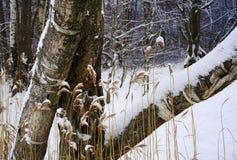 день зимы снега леса трав ствола дерева холодный outdoors стоковое фото rf