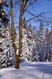 День зимы солнечный в середине леса Стоковое фото RF