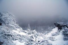 День зимы туманнейший в горах Стоковое Изображение RF
