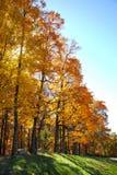 День листопада солнечный Стоковое Изображение RF