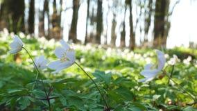 День леса весны солнечный акции видеоматериалы