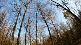 День леса весны солнечный сток-видео