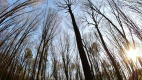 День леса весны солнечный видеоматериал