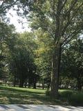 День на парке Стоковые Фотографии RF