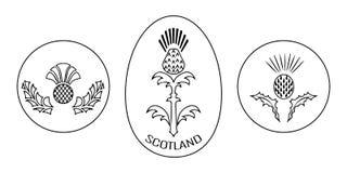 День независимости Шотландии 24-ое июня Вокруг и овальная эмблема с thistle черная белизна Стоковые Фото