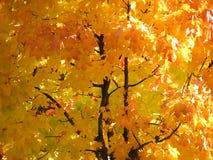 день осени выходит солнечный Стоковое Изображение