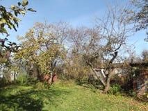 День осени в саде стоковая фотография