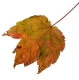 день осени ненастный Стоковые Фото