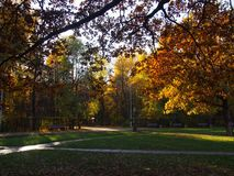 День осени солнечный в парке города Красочные листья в свете солнца Красивая сцена природы предпосылки стоковые изображения rf