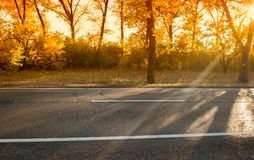 День осени с деревьями и желтой листвой стоковое изображение