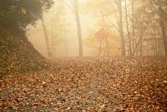 день осени туманнейший Стоковые Изображения RF