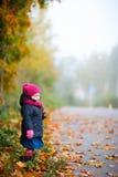 день осени туманнейший Стоковые Фото