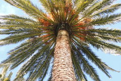 День пальмы солнечный Стоковая Фотография RF