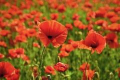 День памяти погибших в первую и вторую мировые войны, день Anzac, спокойствие стоковые изображения rf