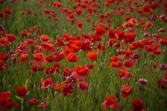 День памяти погибших в первую и вторую мировые войны, день Anzac, спокойствие стоковое фото