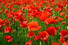 День памяти погибших в первую и вторую мировые войны, день Anzac, спокойствие стоковые изображения