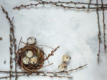 День пасхи Небольшое гнездо с яйцами триперсток на белой предпосылке, с открытым космосом для входного сигнала текста, логотипа,  стоковые изображения
