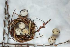 День пасхи Небольшое гнездо с яйцами триперсток на белой предпосылке, с открытым космосом для входного сигнала текста, логотипа,  стоковая фотография