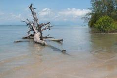 День пня дерева на пляже с небом bule Стоковые Фотографии RF