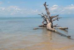 День пня дерева на пляже с небом bule Стоковая Фотография