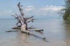 День пня дерева на пляже с небом bule Стоковая Фотография RF