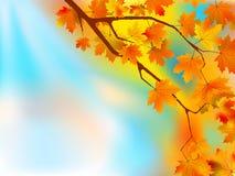 день предпосылки осени выходит солнечный Стоковые Изображения RF