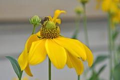 День пчел меда Стоковые Фотографии RF
