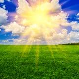 День пшеничного поля весной Стоковые Фотографии RF