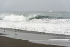 День пляжа с туманом стоковые изображения rf