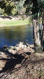 День реки Стоковое Фото