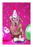 День рождения собаки Стоковая Фотография RF