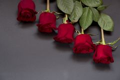 День рождения eCards праздников Красные розы дня Валентайн стоковое изображение rf