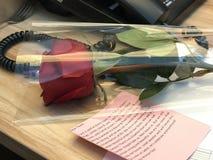 День роз Стоковое Фото