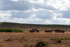 День семьи - слон Буша африканца Стоковое Изображение RF