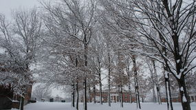 День снега в древесинах стоковое изображение